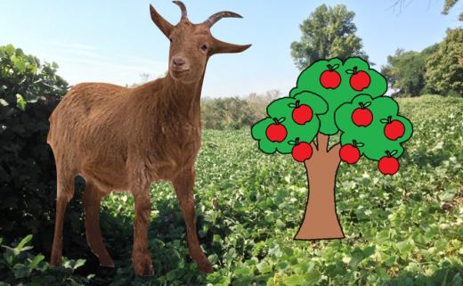goat_tree