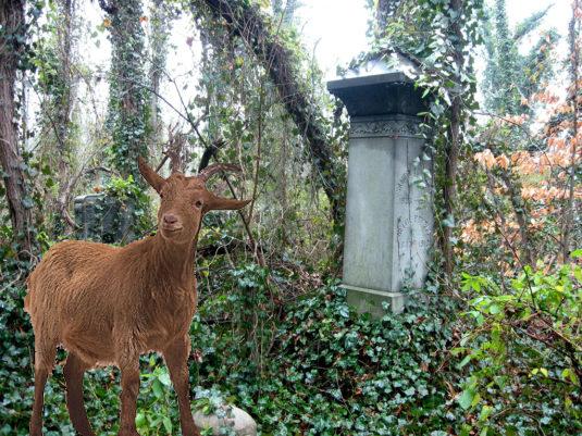 Evergreen_cemetery_rva-535x401