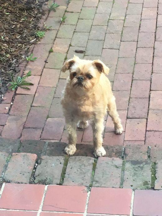 I Surrendered My Dog Can I Get Him Back